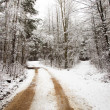 Road in the winter - Stock Photo