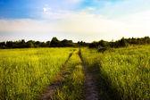 Camino en el campo — Foto de Stock