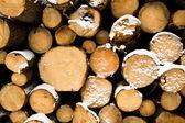 Bäume Fällen — Stockfoto