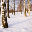 Winter wood - Stock Photo