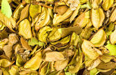 Dried vanilla — Stock Photo