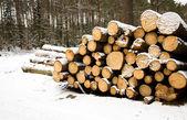 Registra no inverno — Fotografia Stock
