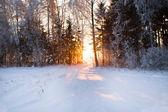 Sunrises — Stock Photo