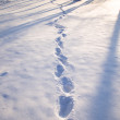 Traces on snow — Stock Photo