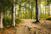 Autumn wood (beechen) — Stock Photo