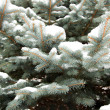 Fir-tree in snow — Stock Photo #9235615