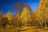 Autumn wood — Stockfoto
