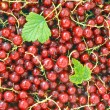 Stock Photo: Currants.
