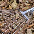 Rake on autumn leaves. — Stock Photo