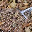 Rake on autumn leaves. — Stock Photo