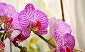 美丽的紫色兰花. — 图库照片