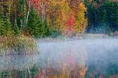 цвета листвы — Стоковое фото