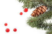 Cone with branches — Stock Photo