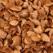 Almond shells background — Stock Photo