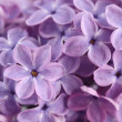 Lilac flowers — Stock Photo #9095630