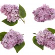 Lilac branches — Stock Photo