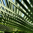 Palm-leaves background — Stock Photo
