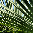 Palm-leaves background — Stock Photo #9095708