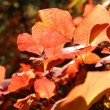 Autumn leaves — Stock Photo #9376886