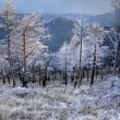 Winter landscape — Stock Photo #9376946
