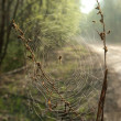Stock Photo: Spider on cobweb