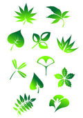Green leaves symbols — Stock Vector