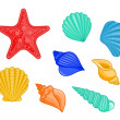 Seashells and sea star - Stock Vector