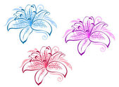 Lily flowers — Vector de stock