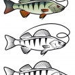 Perch fish — Stock Vector