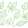Green leaves set — Stock Vector