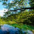 Plitvice Lakes National Park in Croatia, beautiful landscape — Stock Photo
