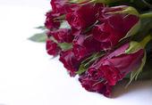 Rosas rojas — Foto de Stock
