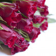 Red roses — Stock Photo #9412881