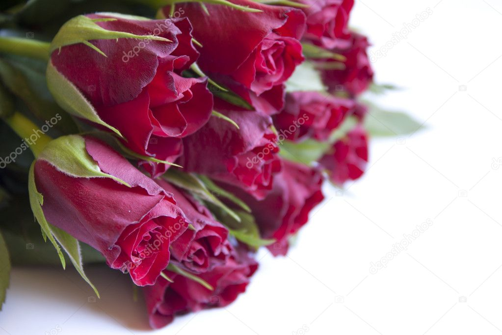 Many beautiful red roses over white background — Stock Photo #9412881