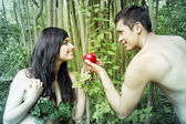 Adam, Eve — Stock Photo