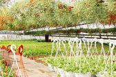 Hot-house plants — Stock Photo