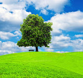 Tree and bench at beautiful meadow against blue sky — Stock Photo