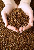 Taze kavrulmuş kahve çekirdeği ellerinde — Stok fotoğraf