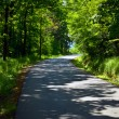 Forest and road — Stock Photo #10403878