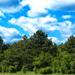 Royalty-Free Stock Photo: Green forest and bright blue sky