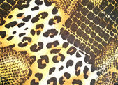 Animal skin pattern — Stock Photo