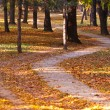 Path in autumn forest — Stock Photo #8522395