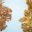 Royalty-Free Stock Photo: Autumn trees sky