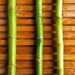 Bamboo stick — Stock Photo