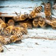 Stock Photo: Working bee close-up
