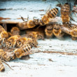 Foto Stock: Working bee close-up