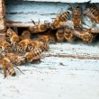 Stockfoto: Working bee macro shot