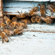 Foto de Stock  : Working bee macro shot