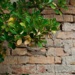 Brick wall and plant - ストック写真
