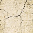 Dry cracked ground - Stock Photo